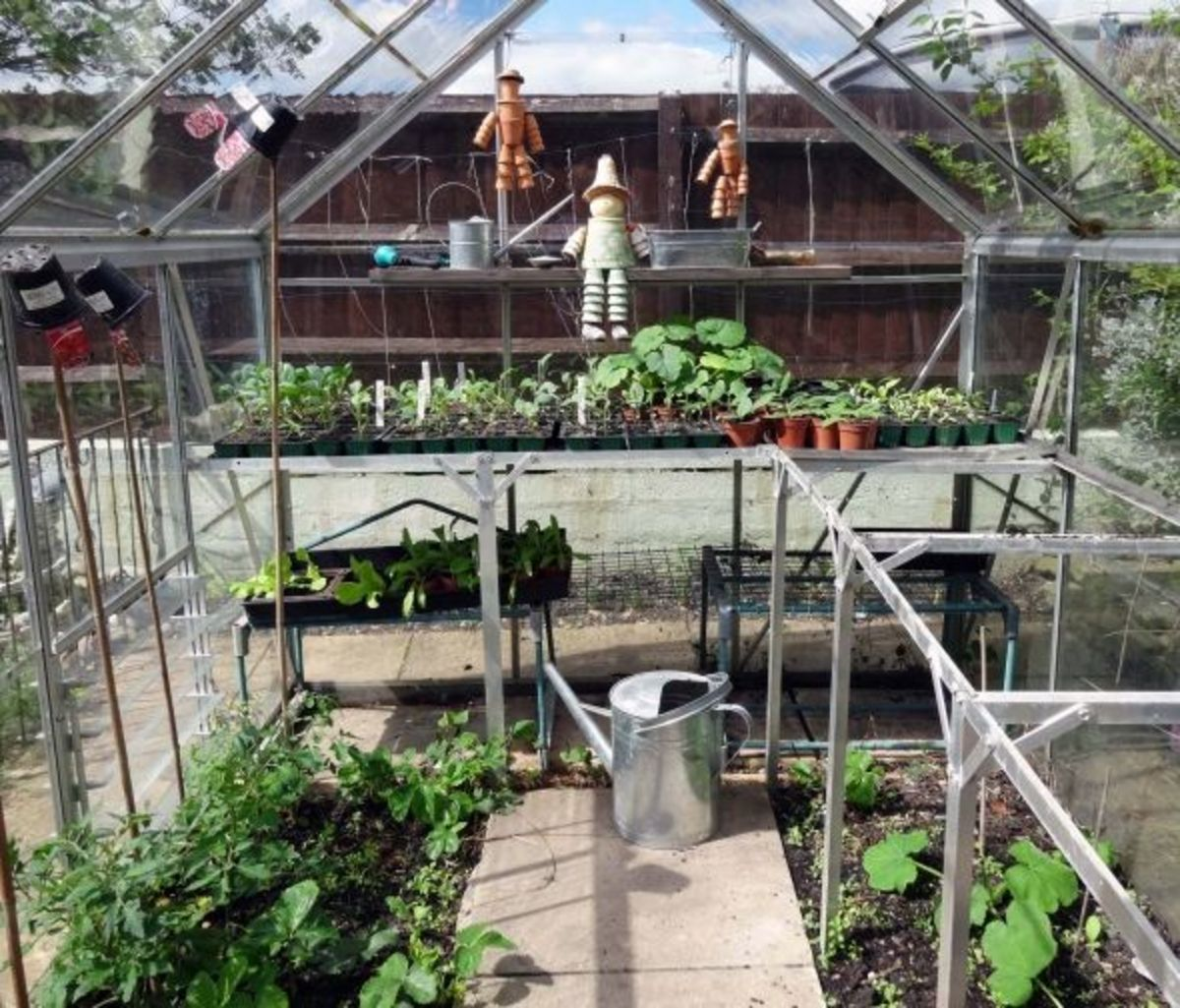 Greenhouse in May