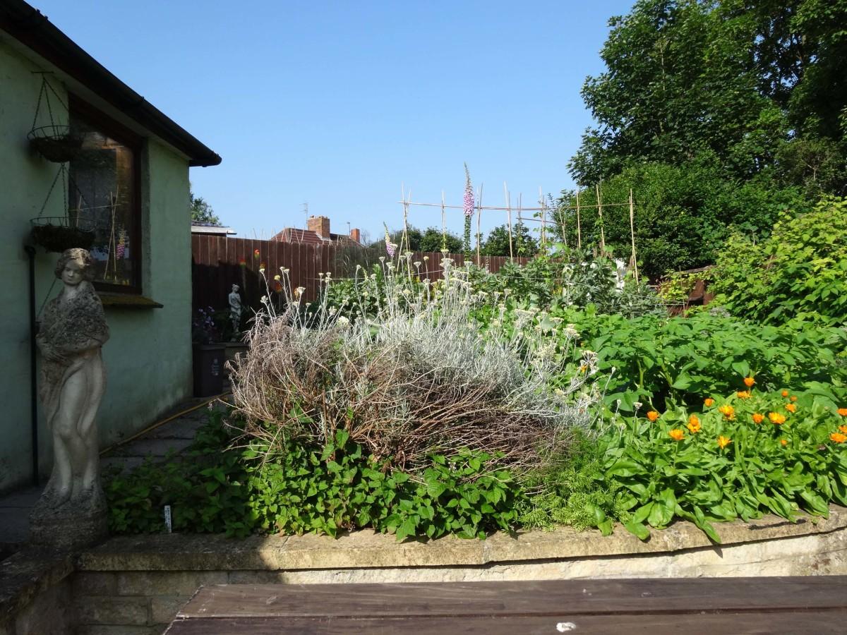 Vegetable Plot in July