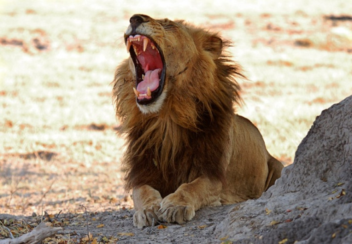 Roll of Thunder...Lion Roar