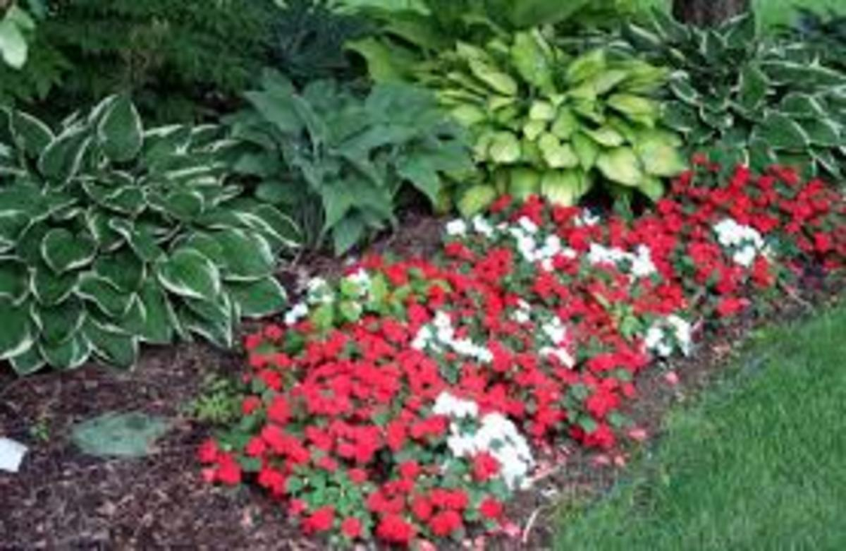 Hostas and impatiens are very compatible.