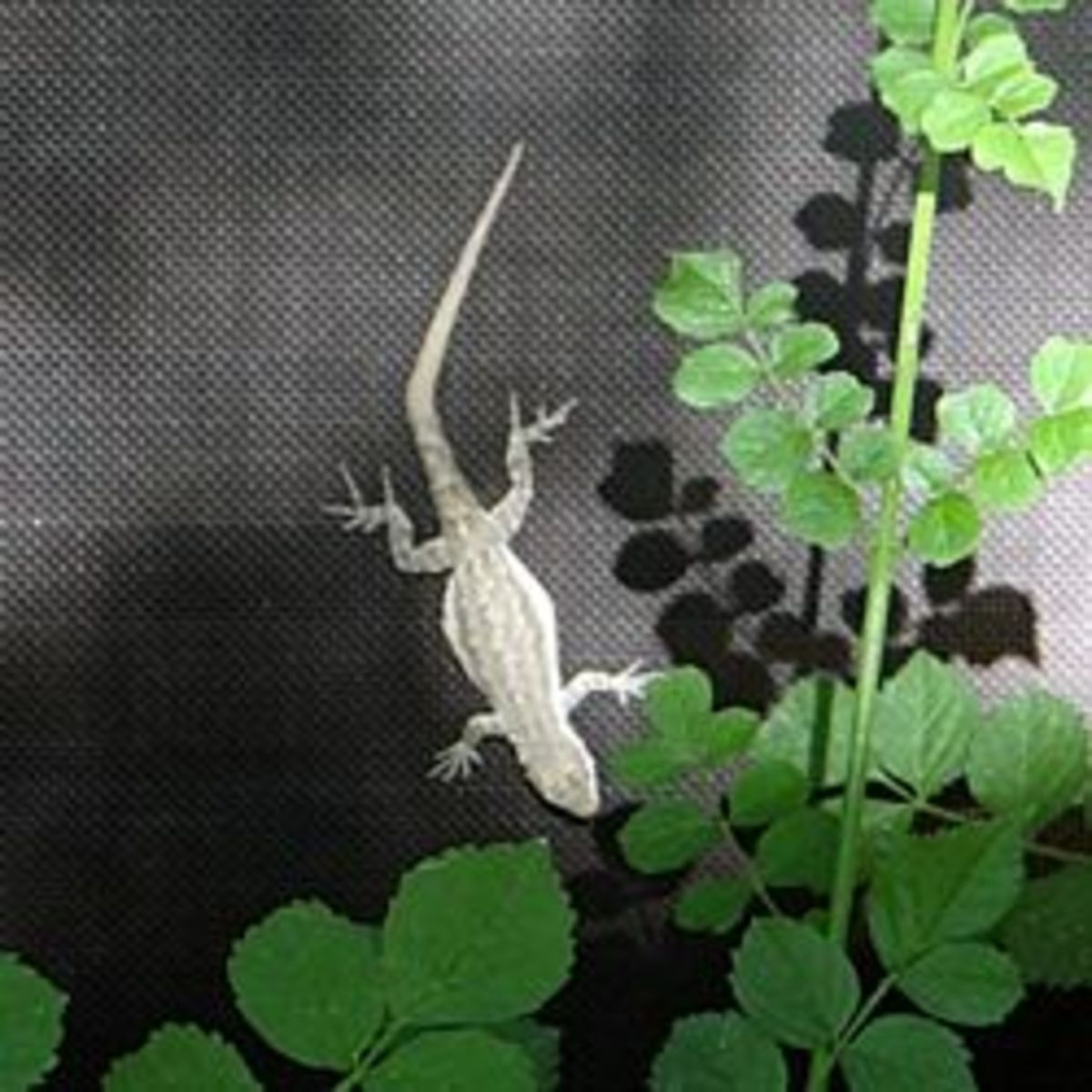 How to Attract Geckos to your Garden for Natural Pest Control