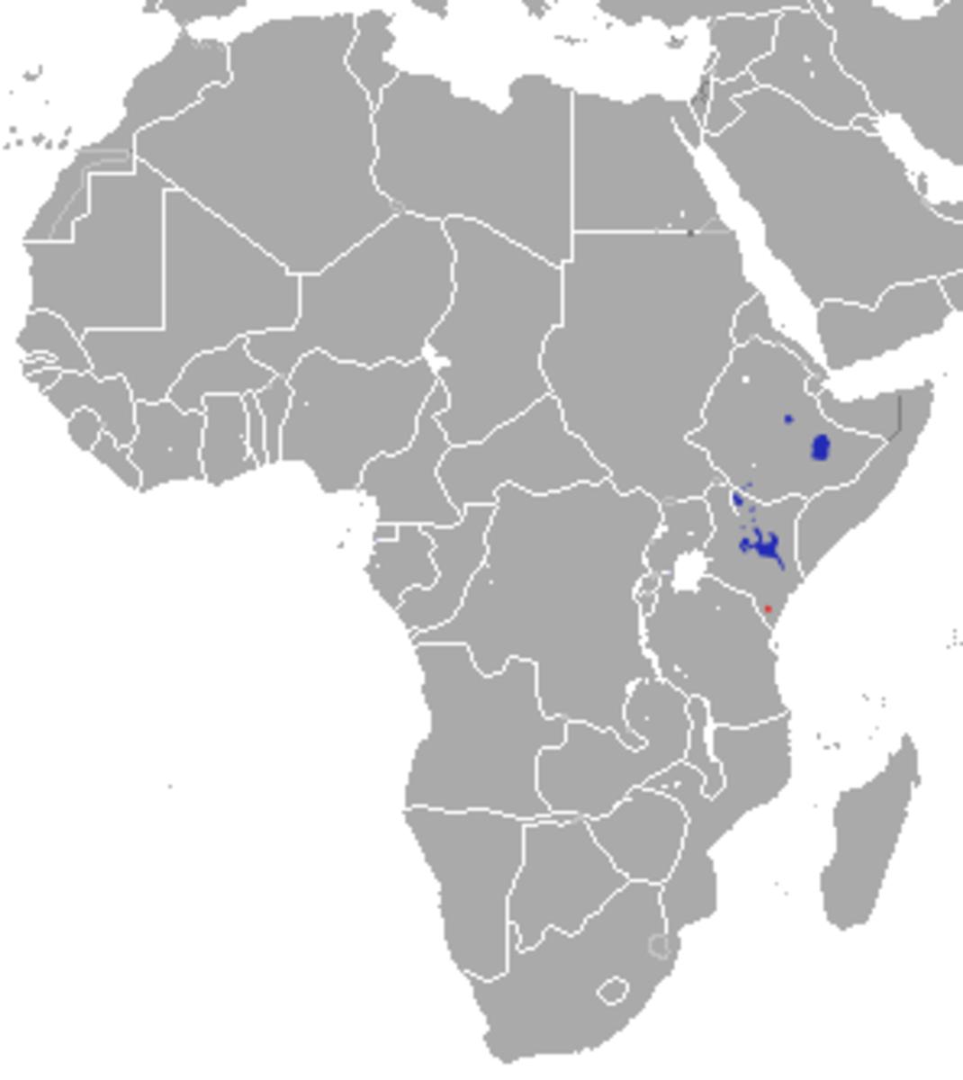 Grevy's zebra is the rarest species.