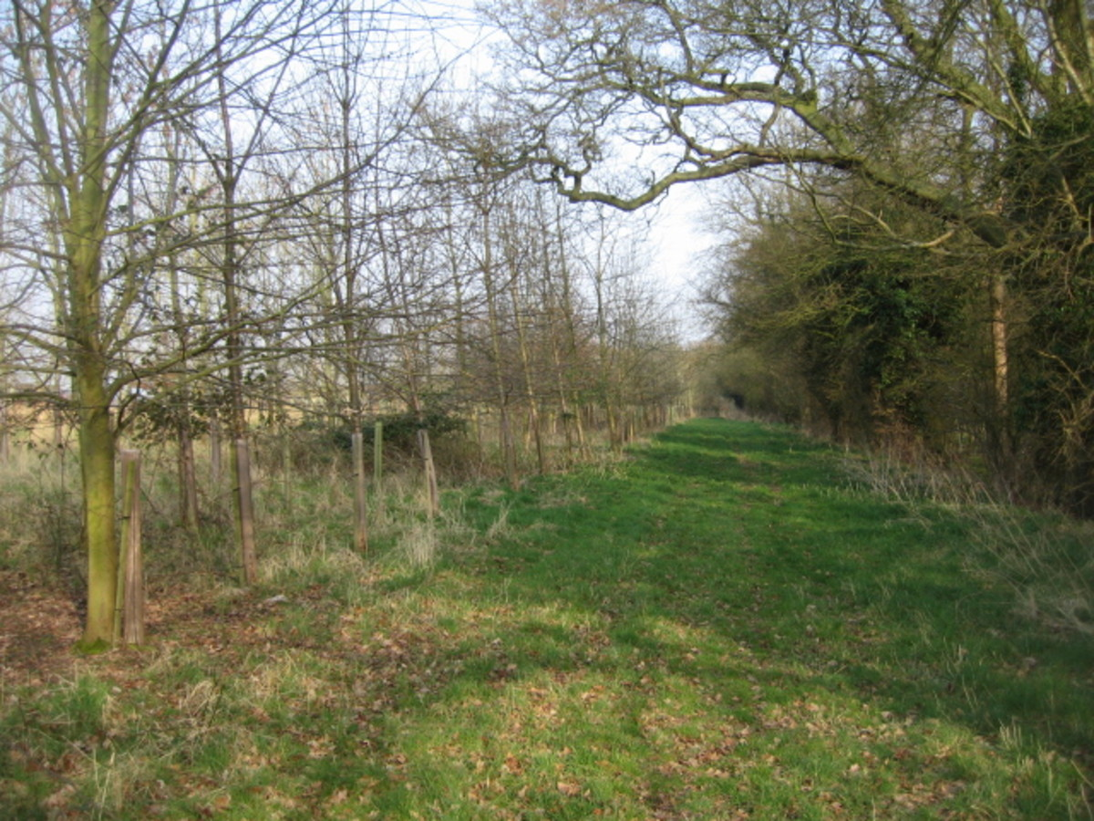 Hampshire country walk - a distraction for Anne and friends from the boredom of country living