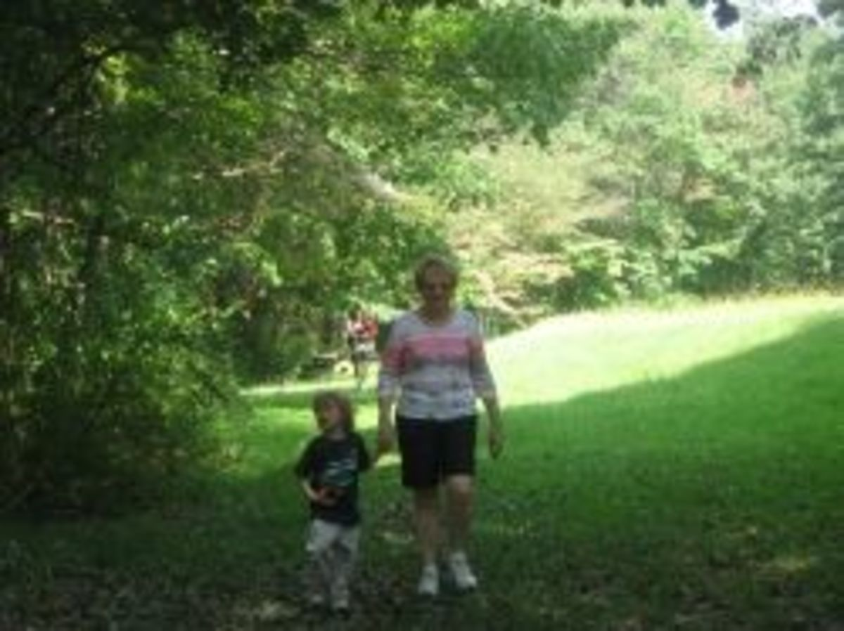 A hike with extended family at a state park. My sons were 5 and 2 at the time.
