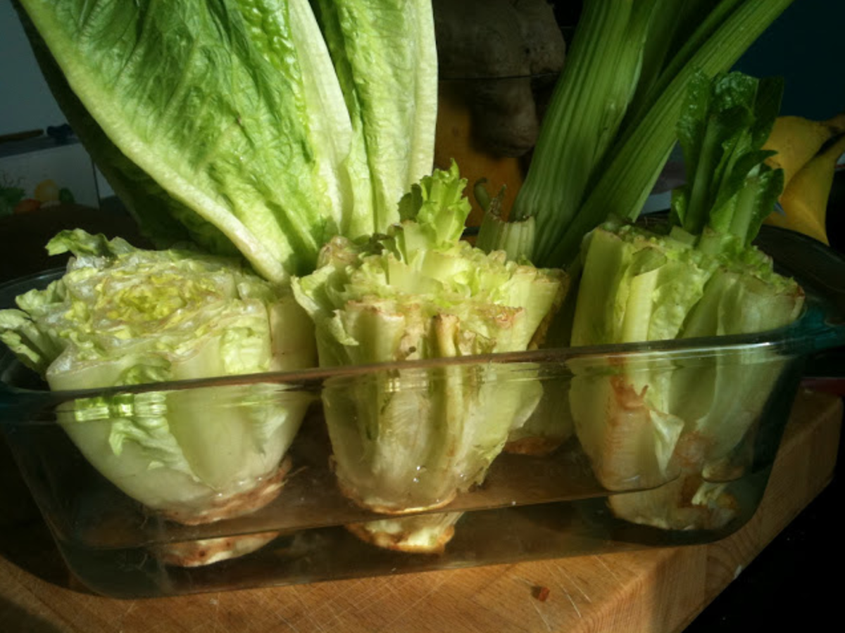 Re Growing Lettuces From Cuttings