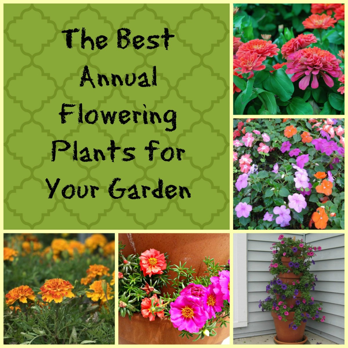 The top 5 annual flowering plants for your garden.