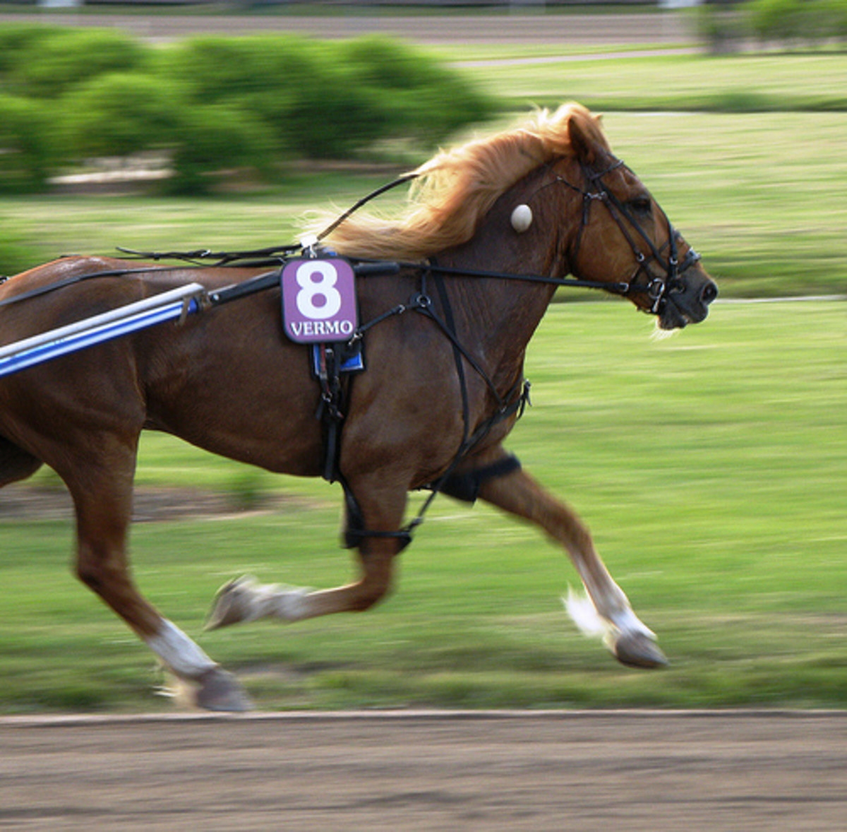 During the warm-ups, watch the horses as they pass by. You want a trotter whose front legs seem  to form a circle as they run.  A sound (healthy) horse will almost always form a natural circle when trotting at a slow pace.