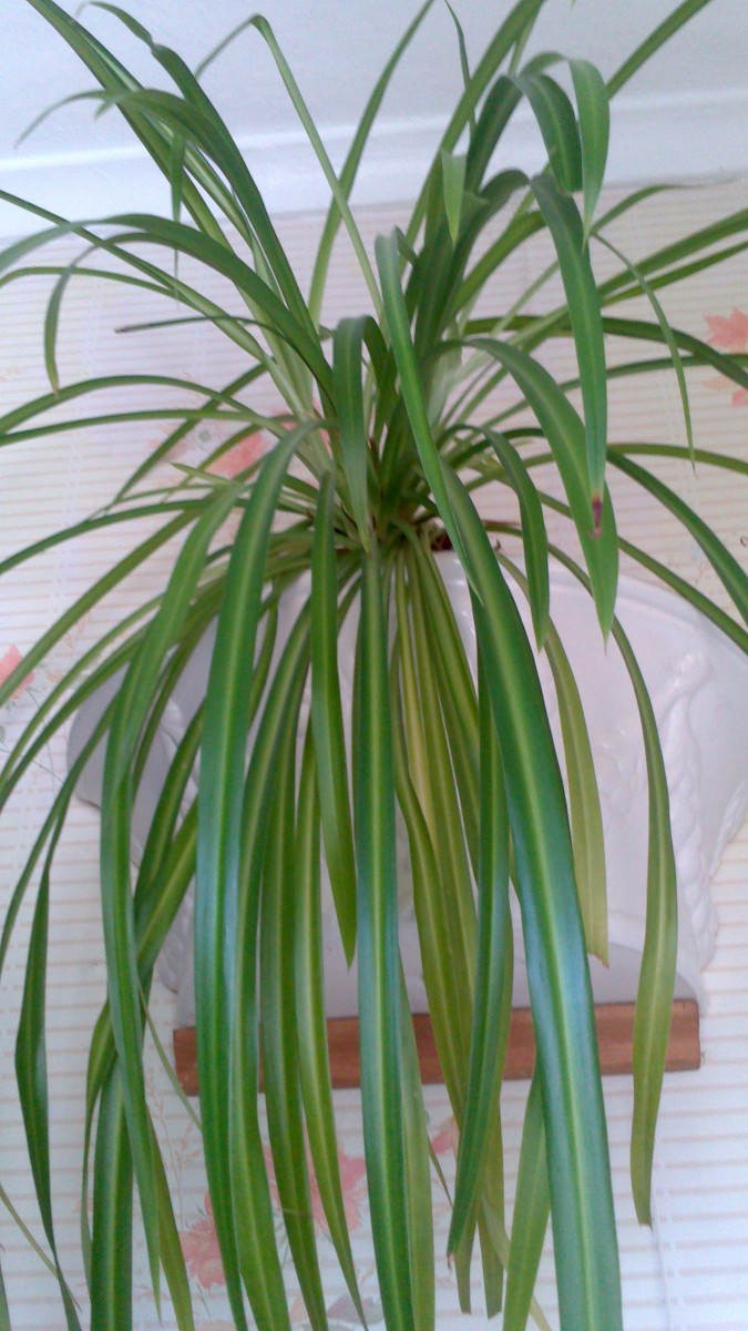 Indoor house plants with names and pictures - Indoor plants with names ...