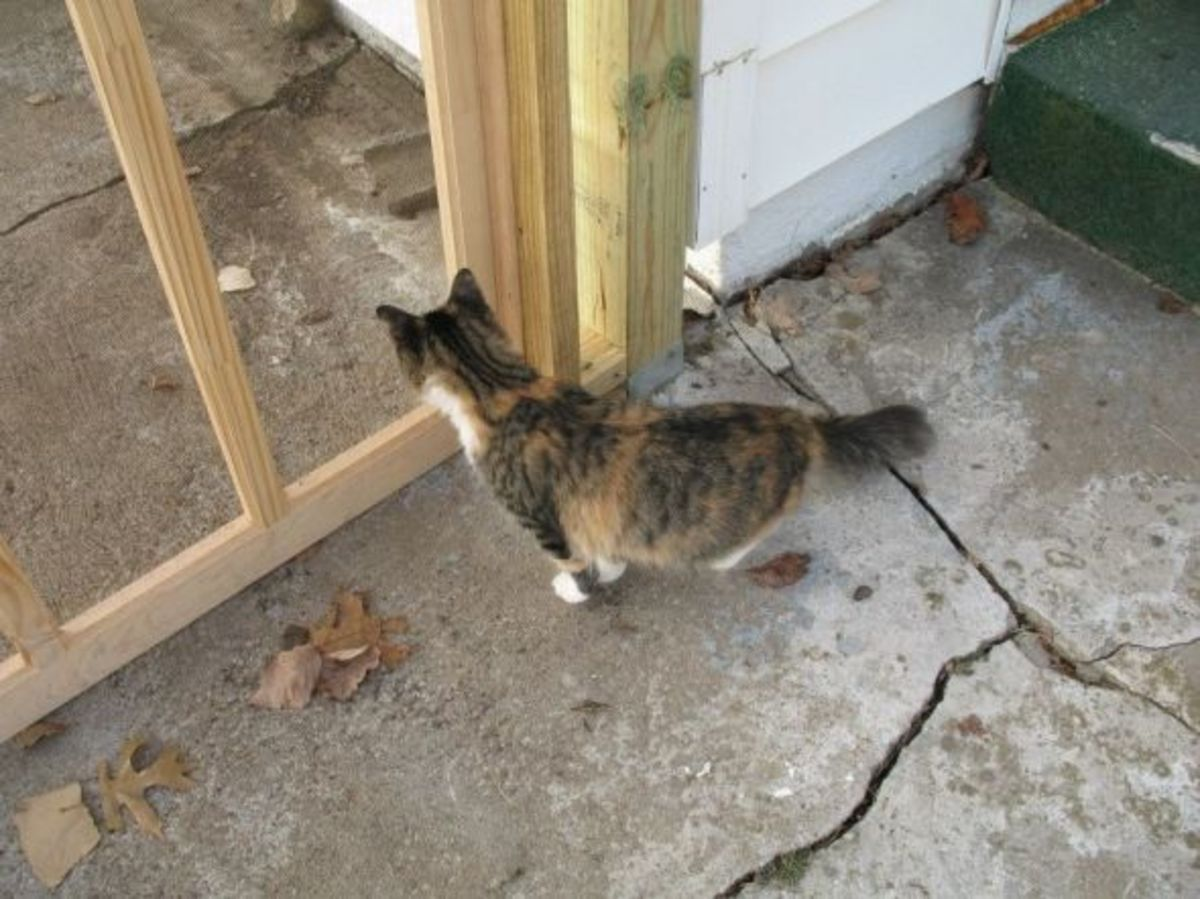 door into cat enclosure