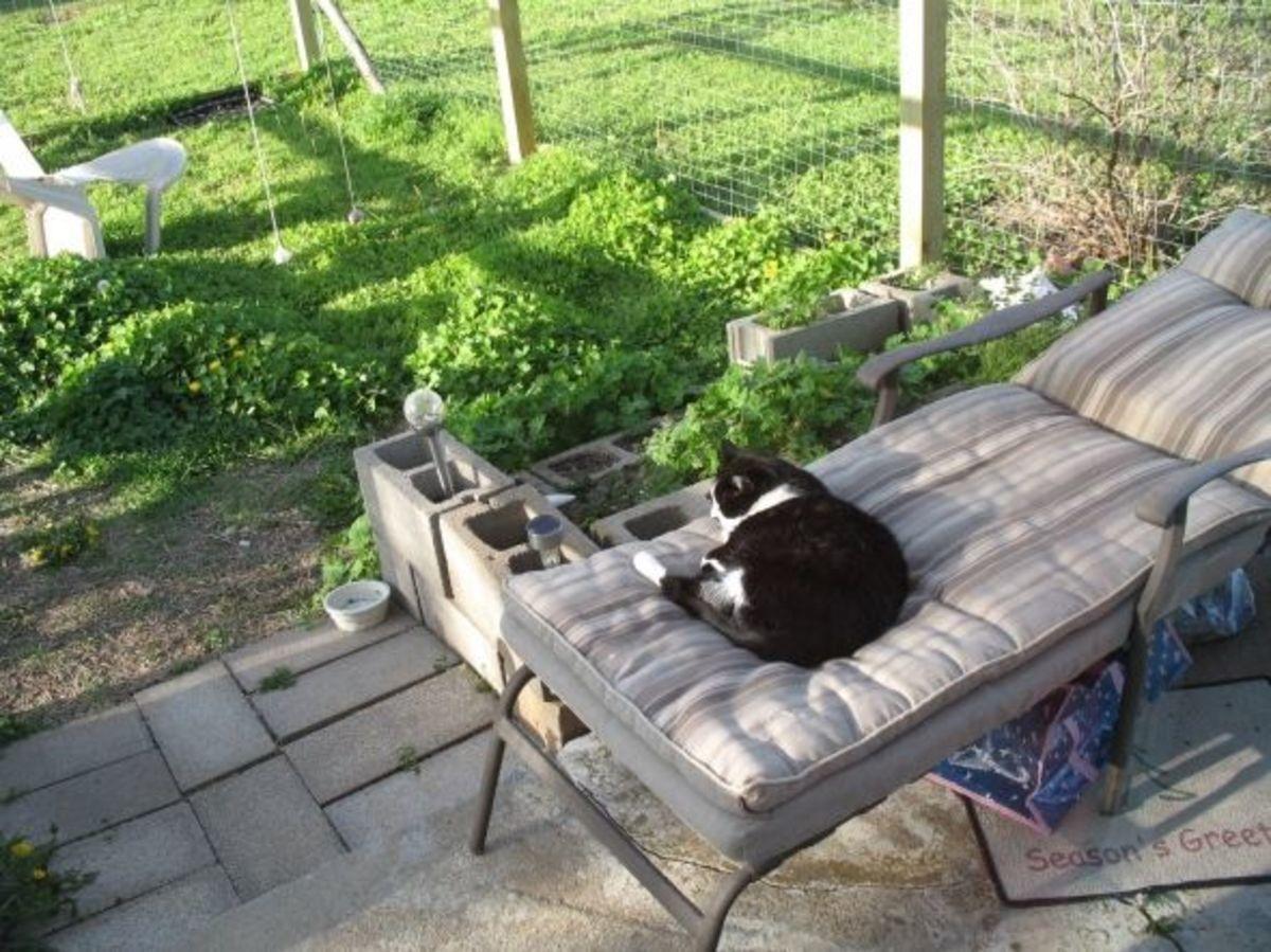 lounge in cat enclosure