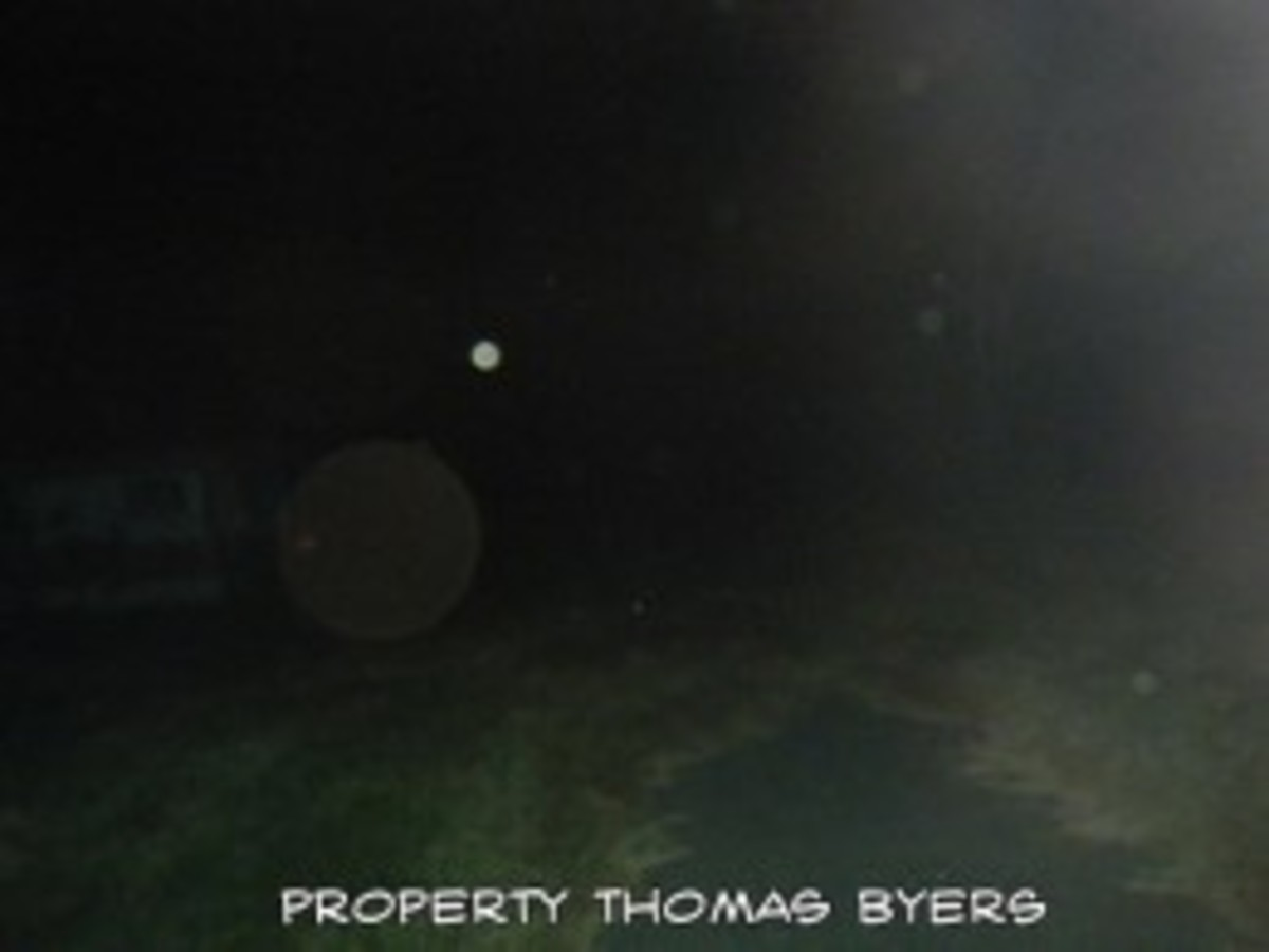 Notice the orbs in this photo. There was no wind and it was 17 degrees when this photo was taken so there were no insects.