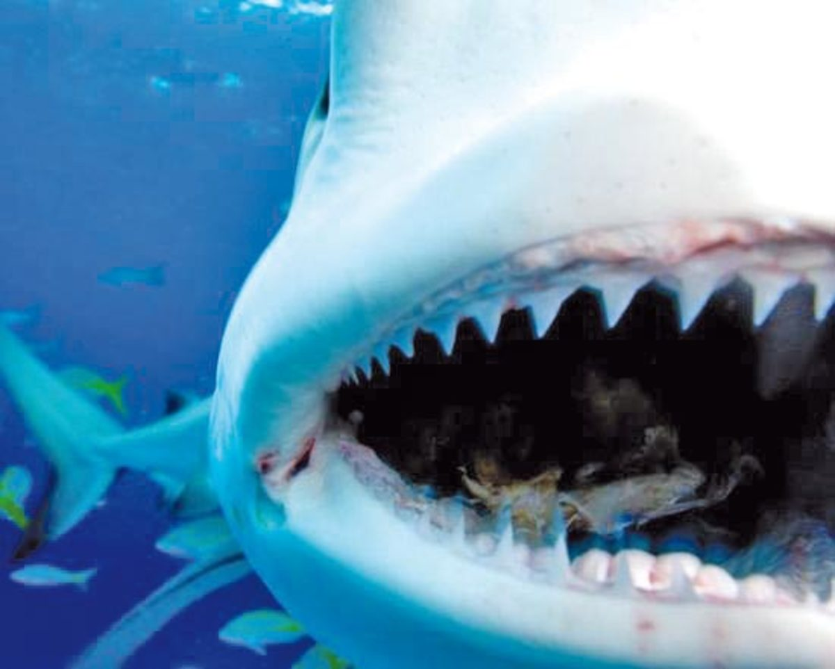 close up of a shark's teeth and mouth