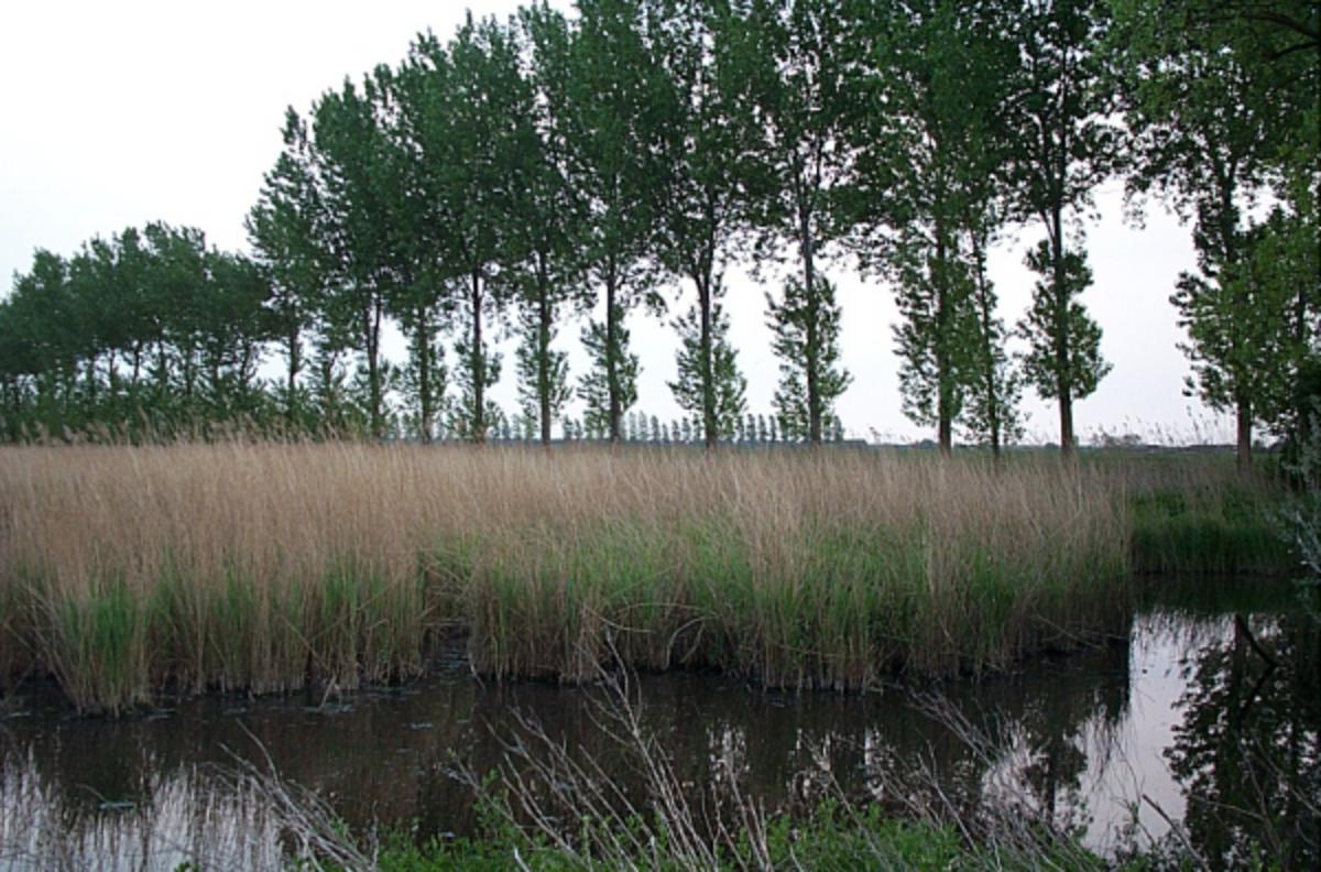 Creek in Zeeuws-Vlaanderen in the Netherlands