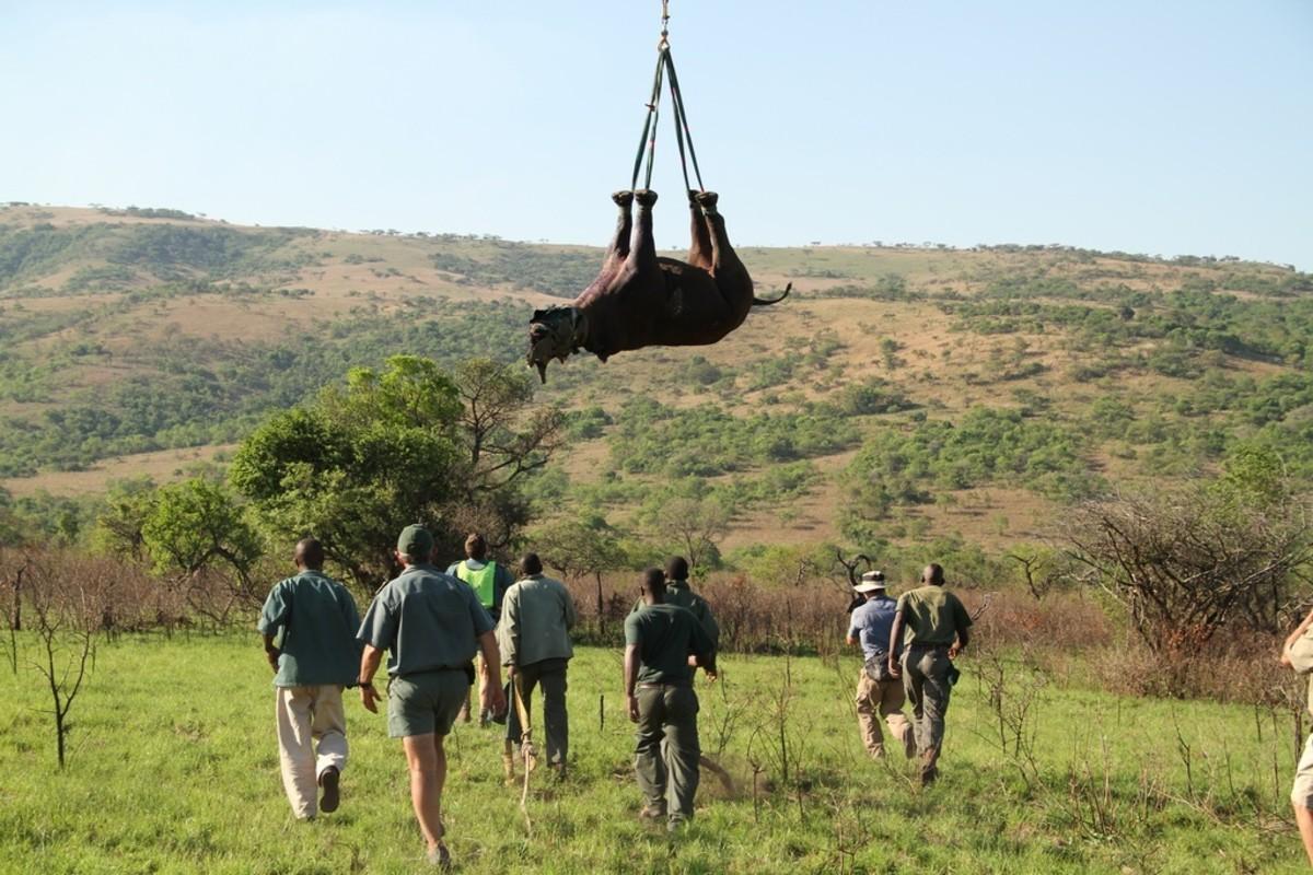 Flight of the rhino, flying rhino