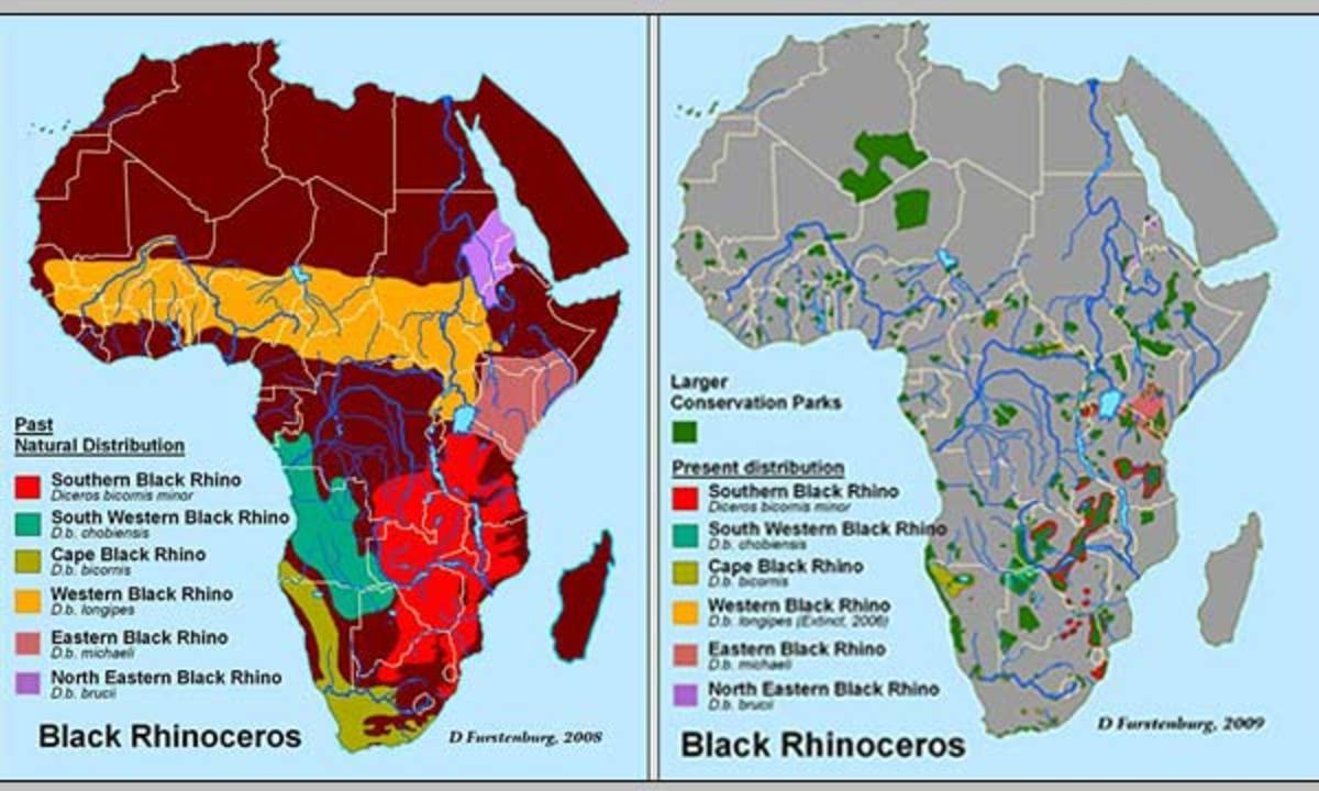 Distribution of black rhino