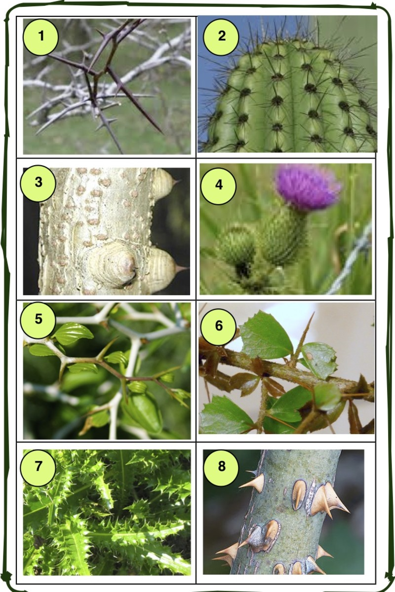 poisonous-plants-how-to-avoid-them-and-what-to-do-if-you-are-exposed