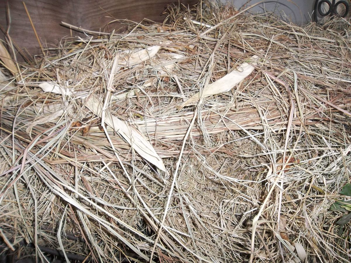 Surround your rabbits with plenty of hay - which is really dried grass
