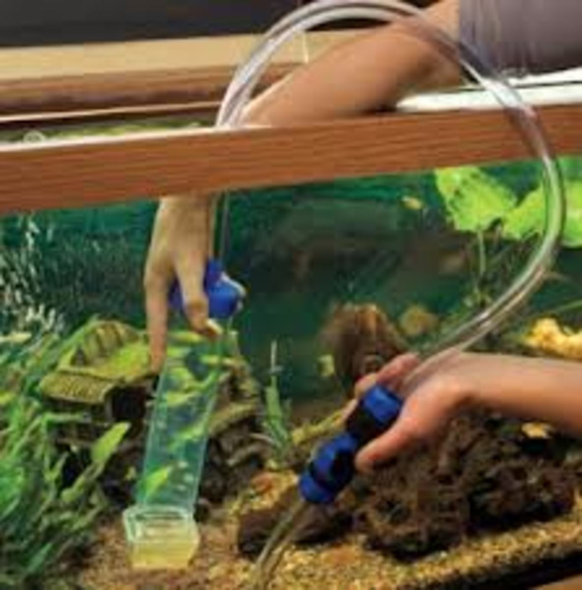 conducting-rountine-maintinecnce-on-your-fish-tank