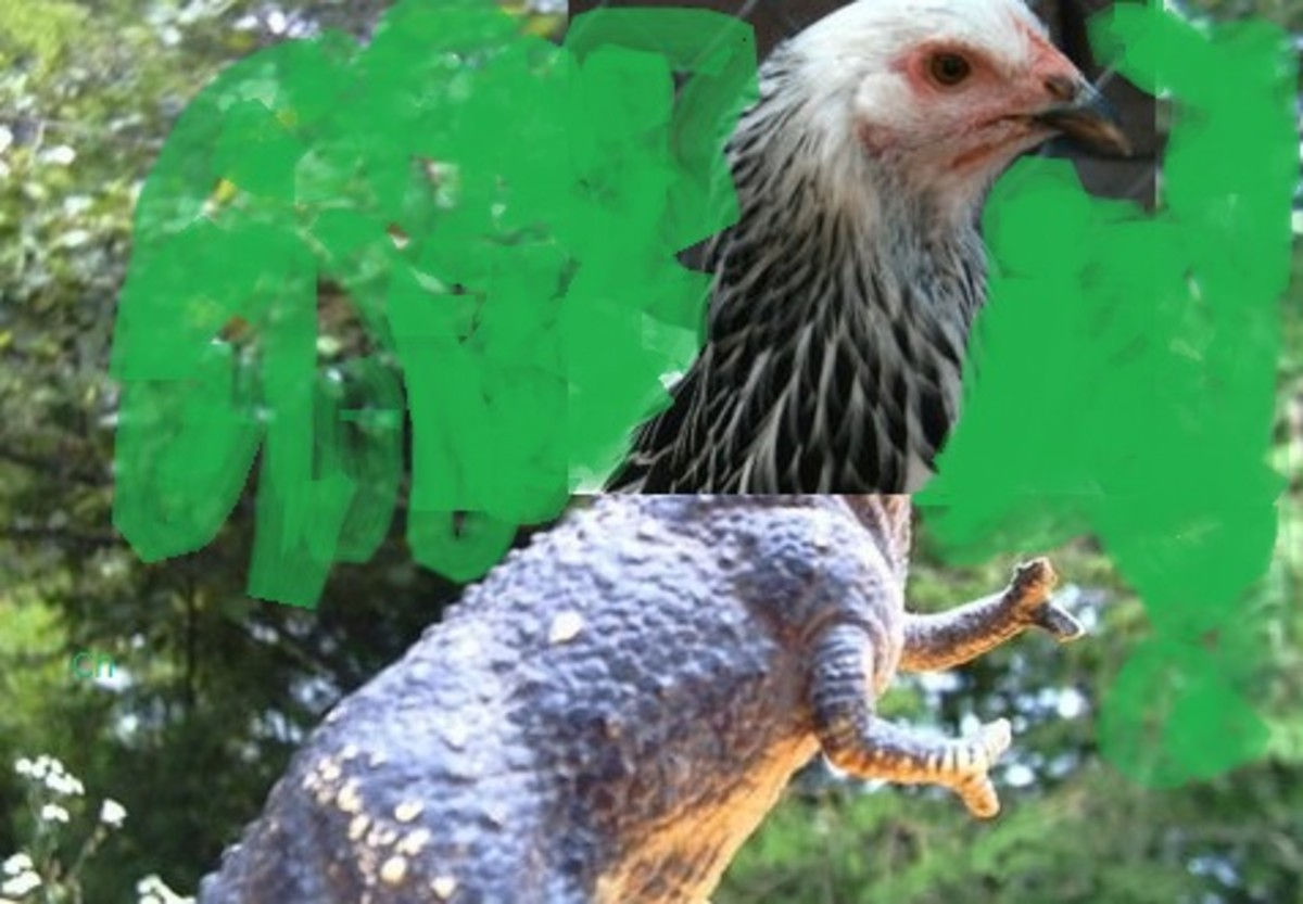 Be careful: chickens and dinosaurs seem to share the same ancestry!