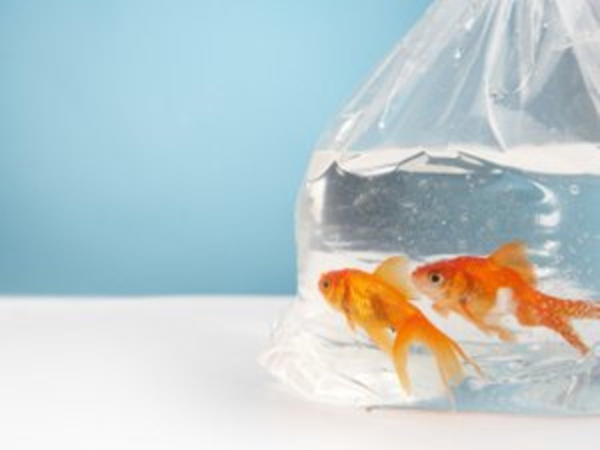 Fish come in bags, usually, when you bring them home from the pet store