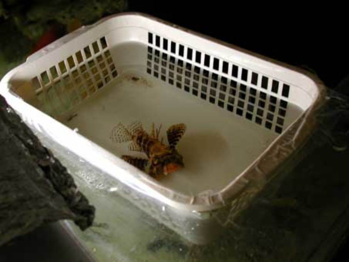 'Howdy baskets'  are used to safely introduce fish to their new home without risk of the new or old fish getting hurt. They also allow fish to get used to their new home over a longer period of time