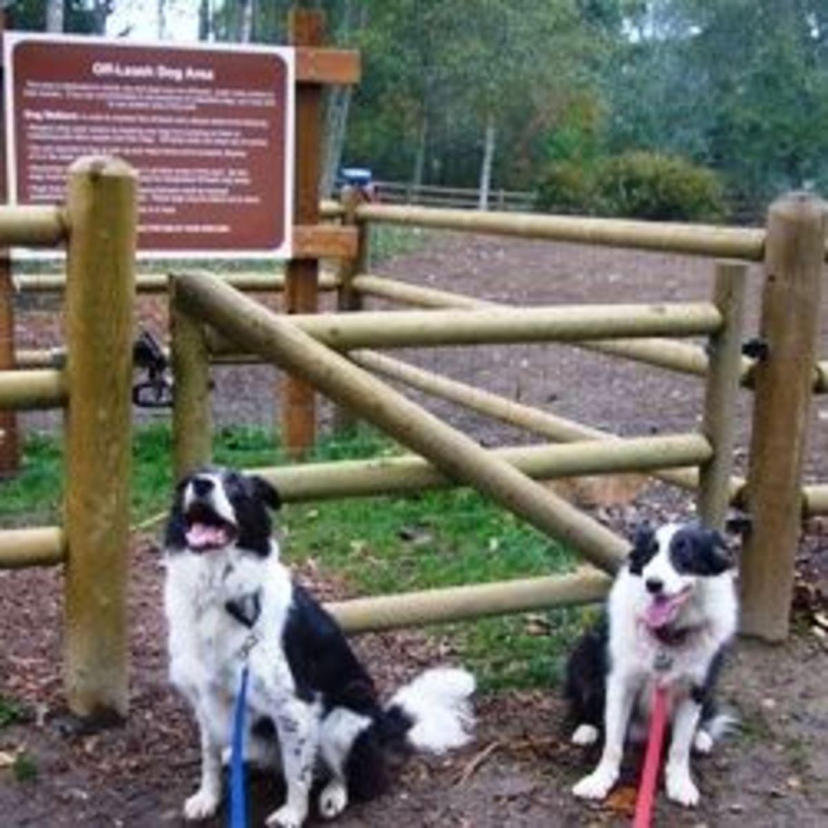 Tambark Creek Dog Park