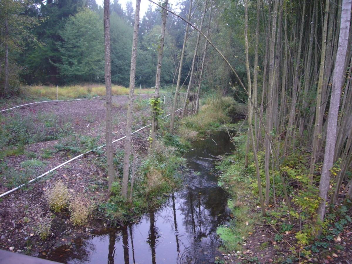 Tambark Creek