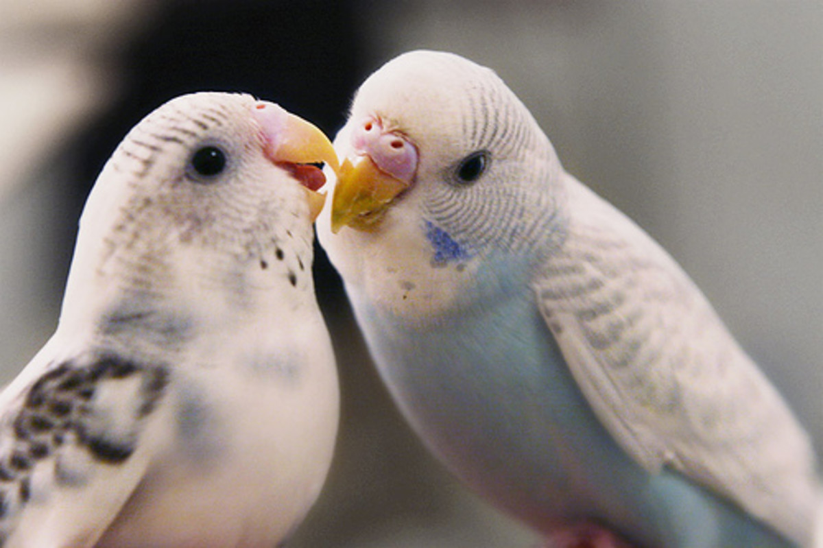 do-animals-fall-in-love