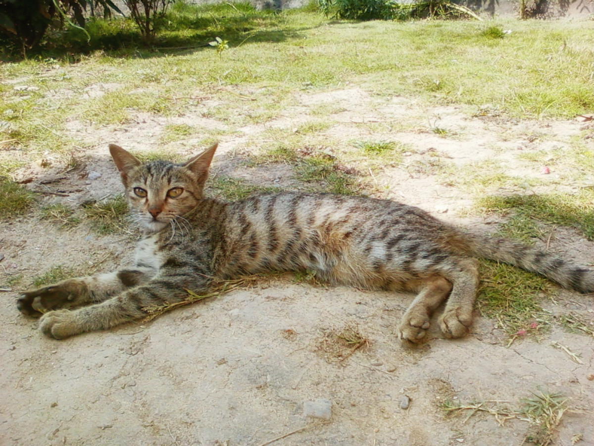 As a cat owner, you must know about cat diseases, vaccinations and medications.