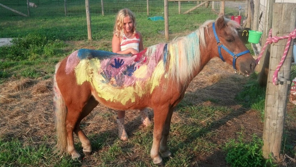 Horse Camp Craft Projects