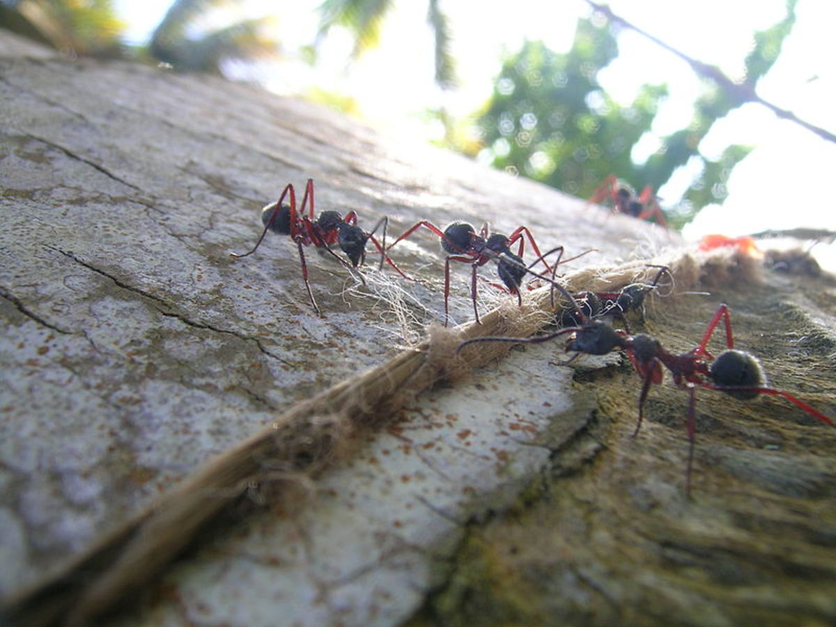 Go to the ant, you sluggard!