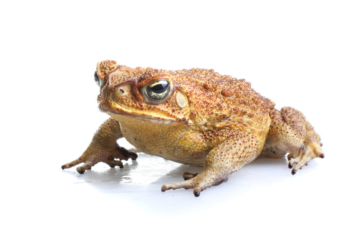 Toads are animals that hibernate