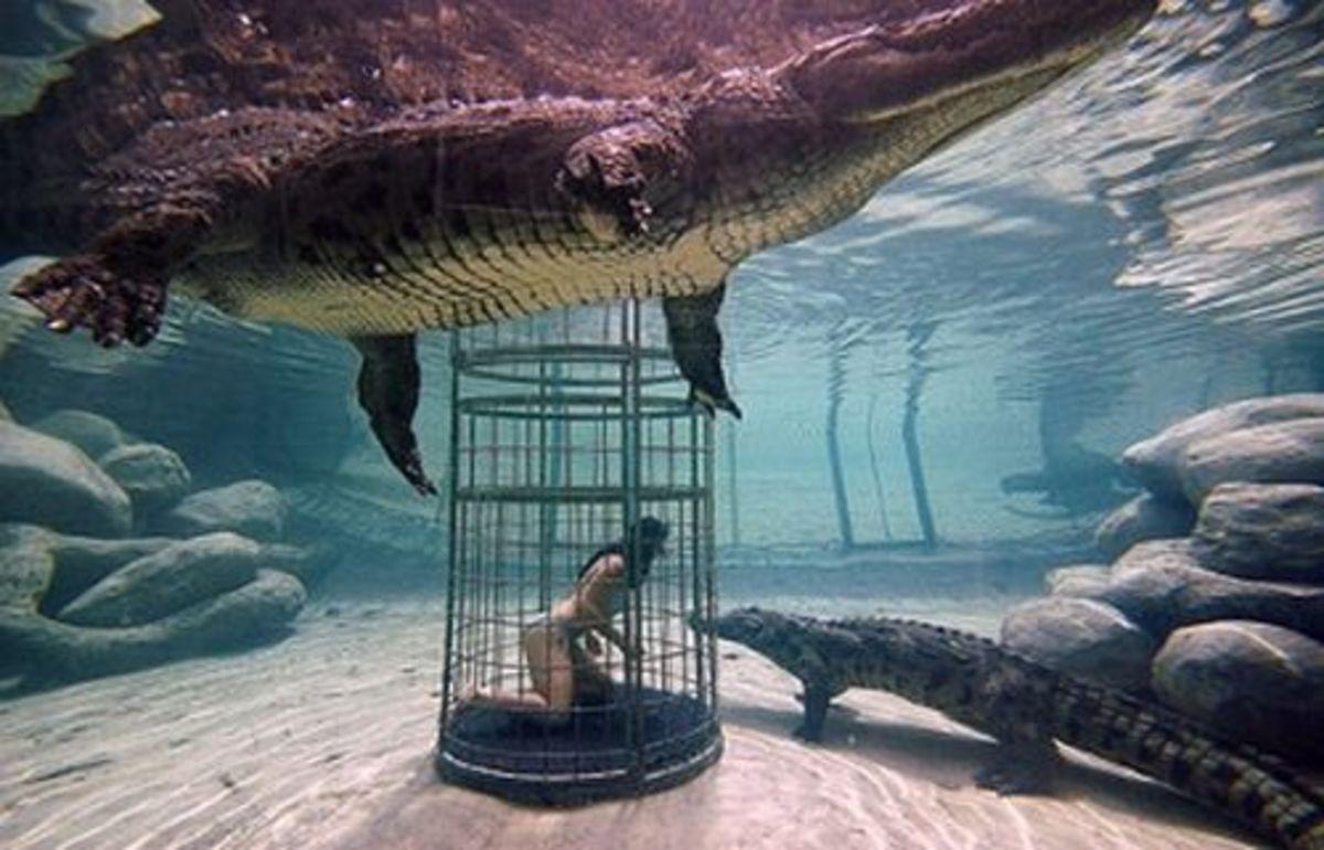 Crocodile cage-diving.