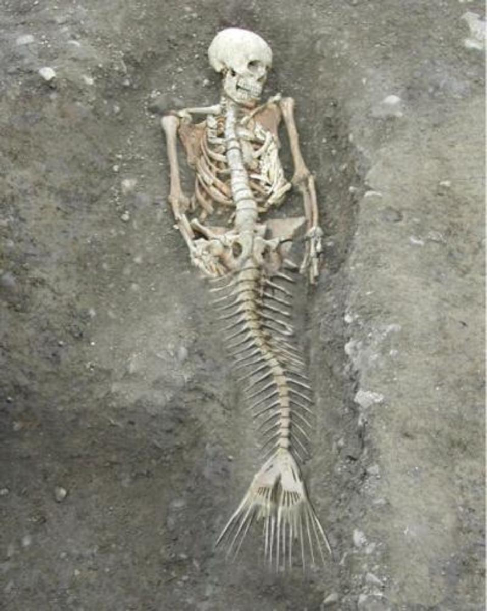 Is This The Photo Of A Real Mermaid Skeleton?