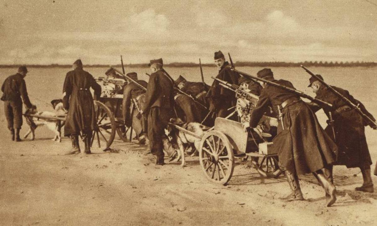 Belgian machine guns pulled by dogs. Near Termonde