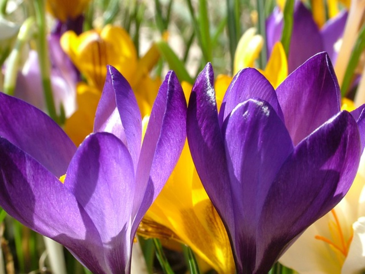 Celebration of springtime.
