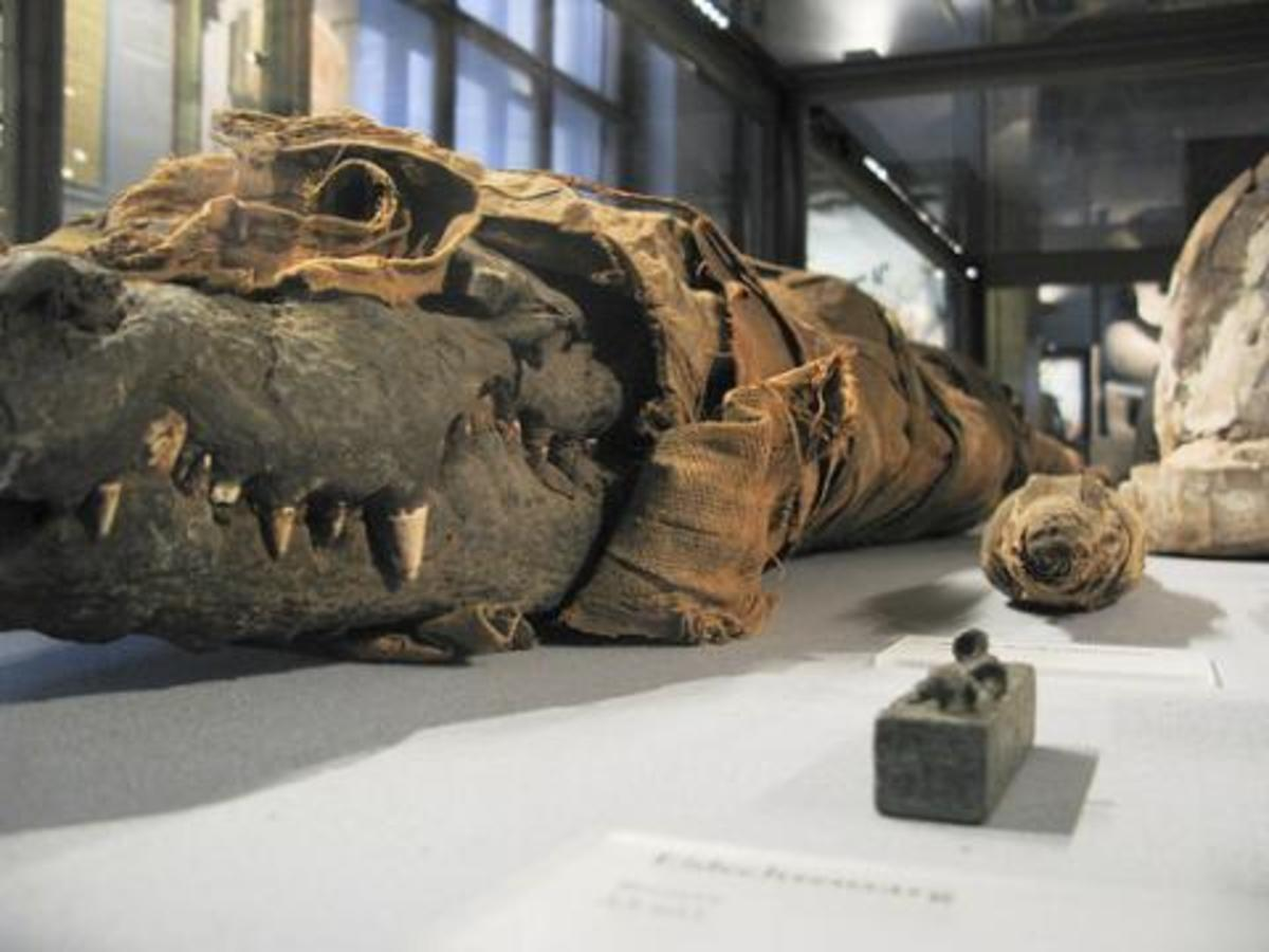 animal-mummies-ancient-egypts-reverence-for-beasts