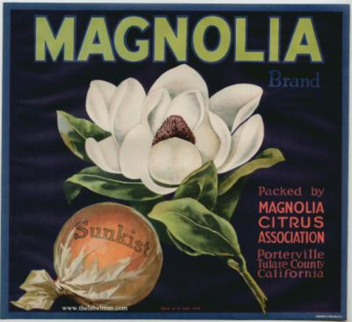 Magnolia free cross stitch pattern
