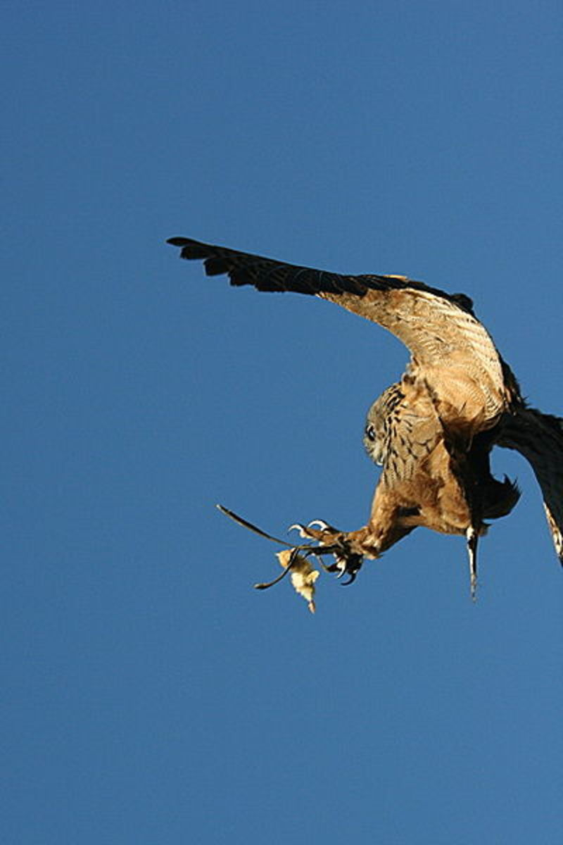 Catching prey in flight