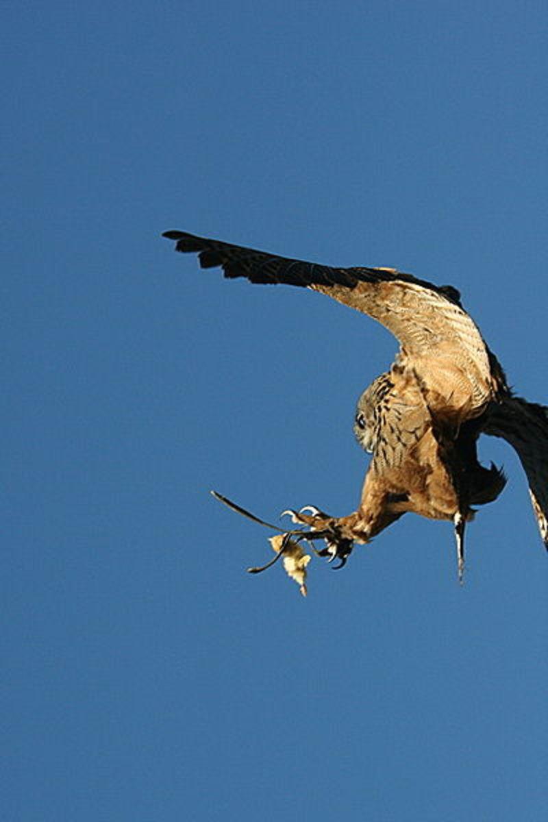 Catching prey in flight
