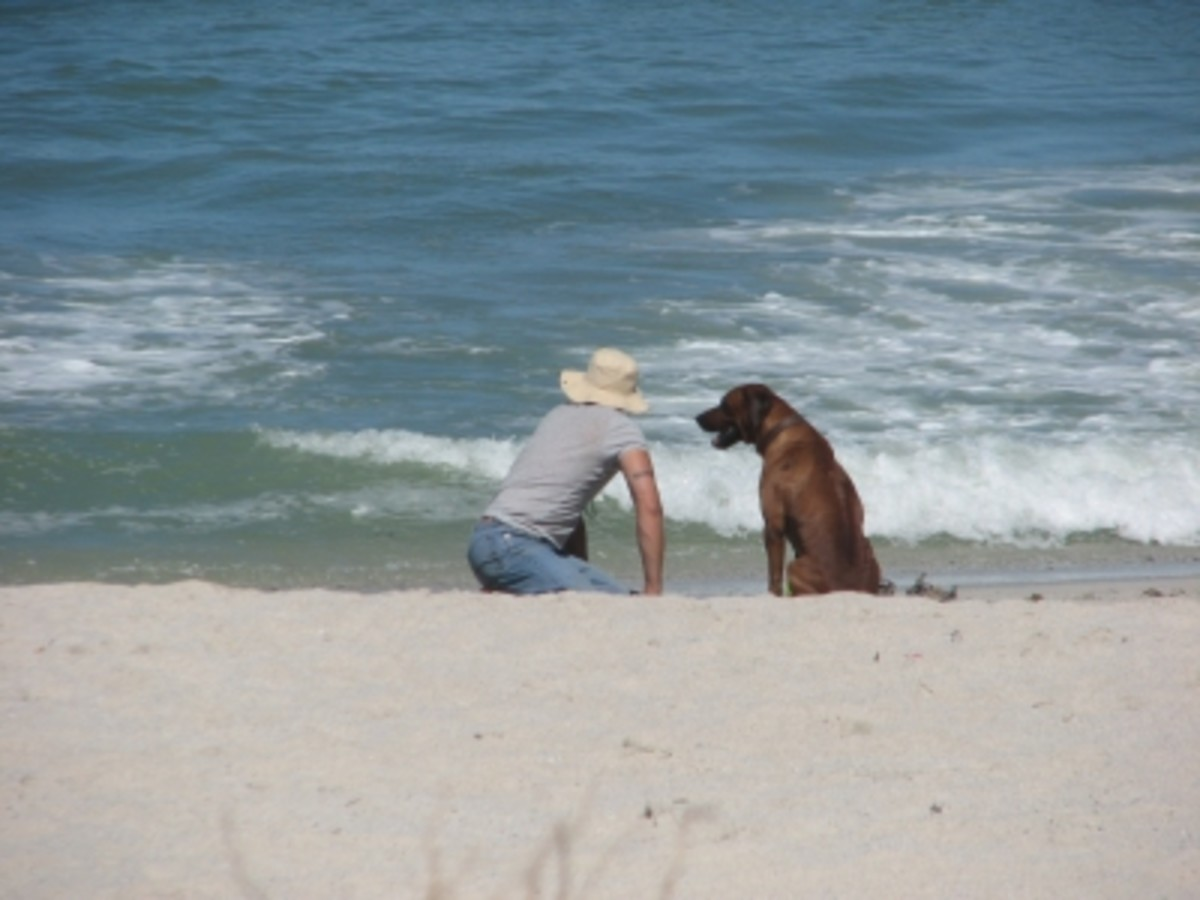 Photos can also highlight your kindness like this one with a man and his dog.