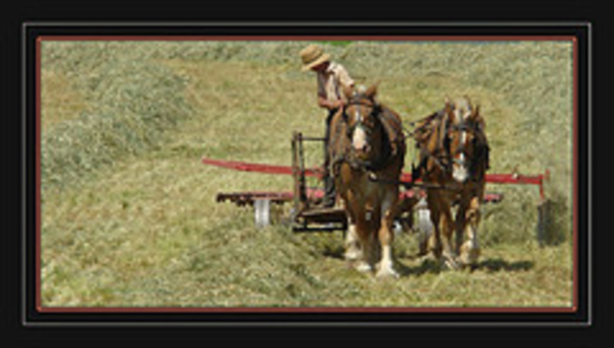 The Amish have maintained older traditions and don't value dental care the way outsiders do.