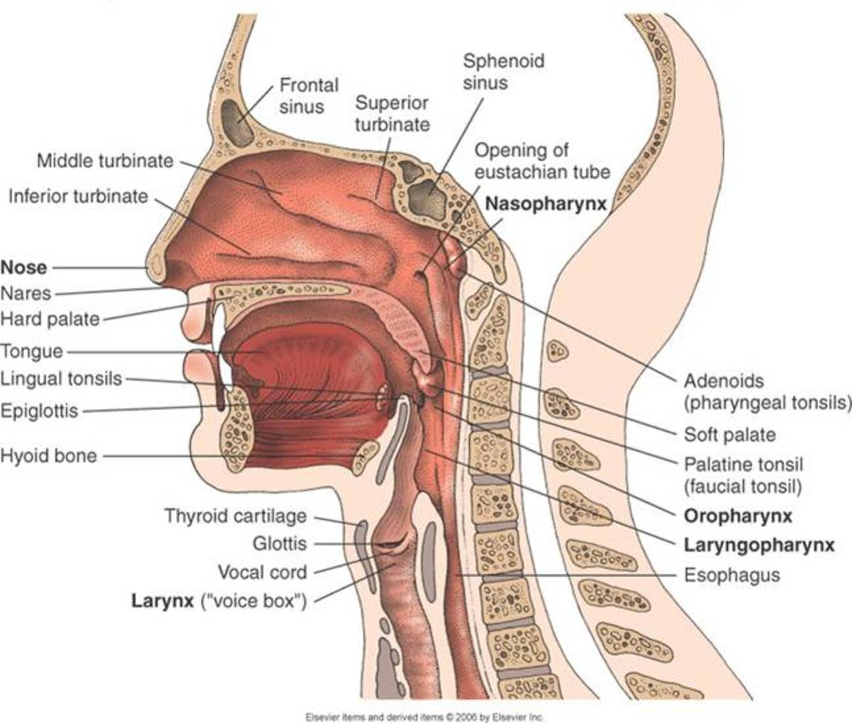 Upper Tract Surgery