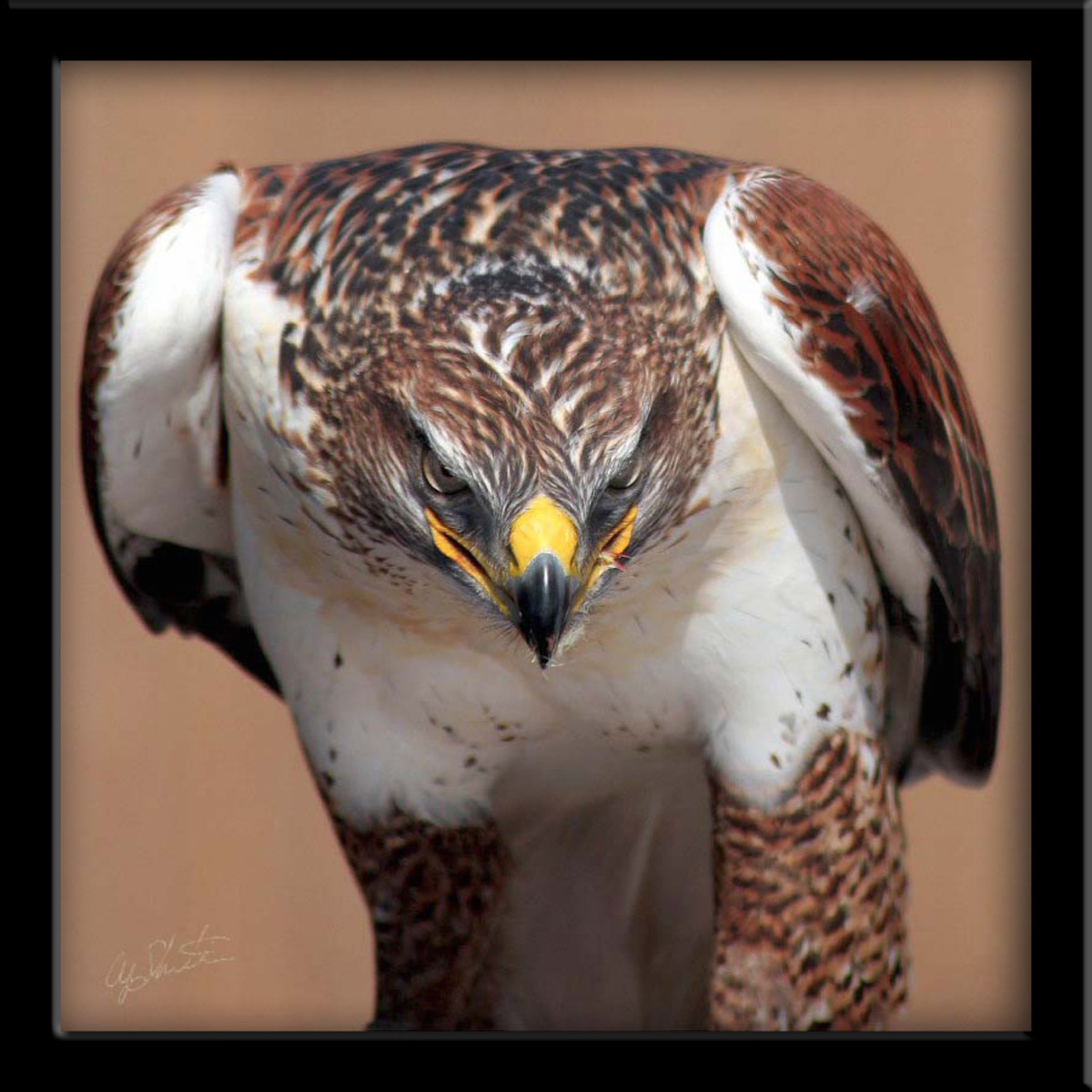 100-stunning-pictures-of-eagles-and-hawks-eagle-photography-hq