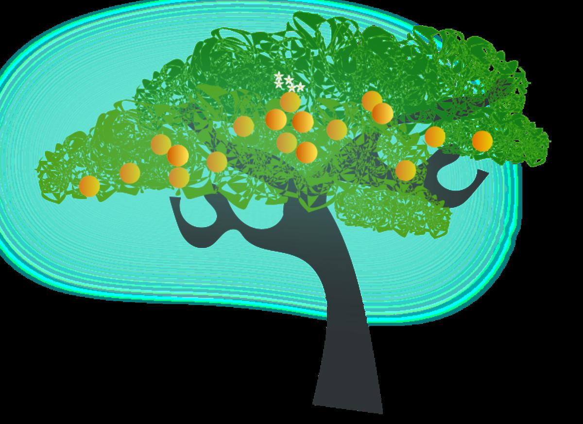 Orange Tree with Ripe Oranges
