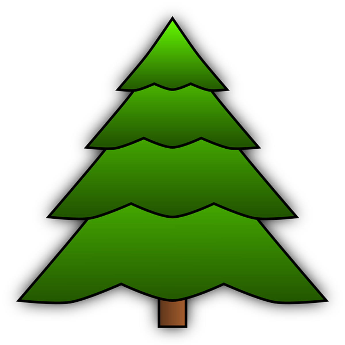 Two-toned Green Pine Tree