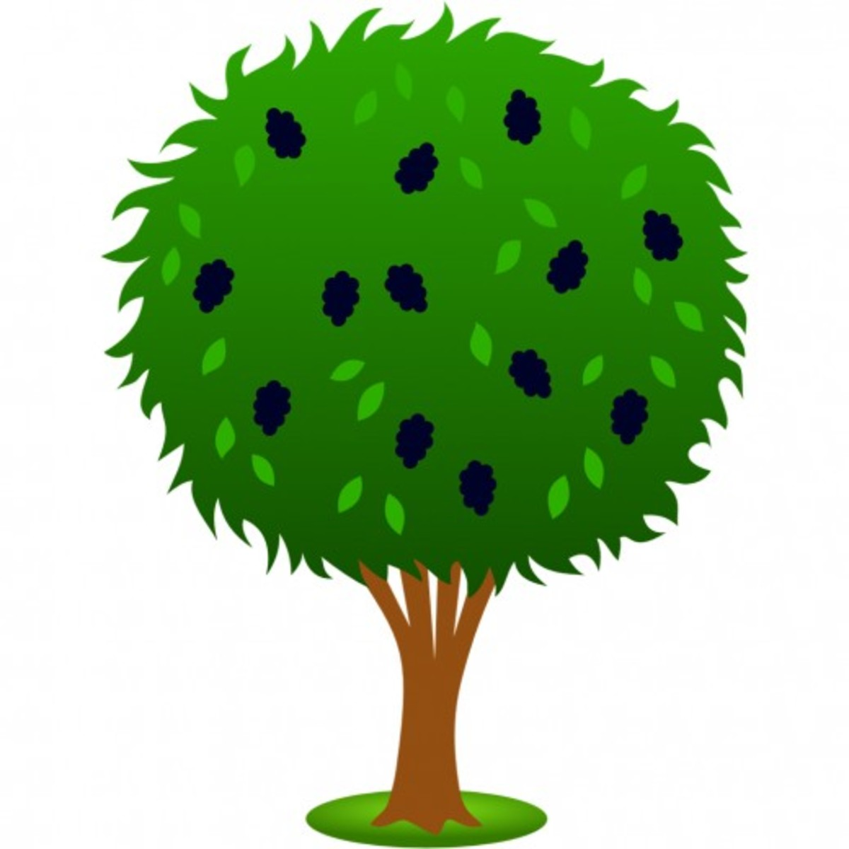 Mulberry Tree Clip Art