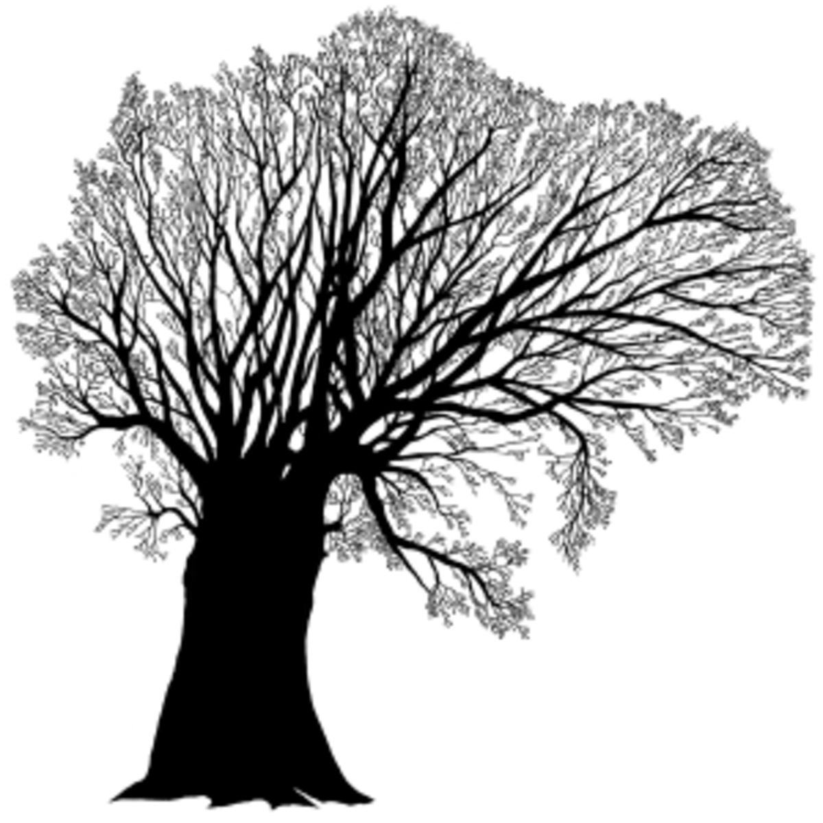 Oak Tree Nearing Winter