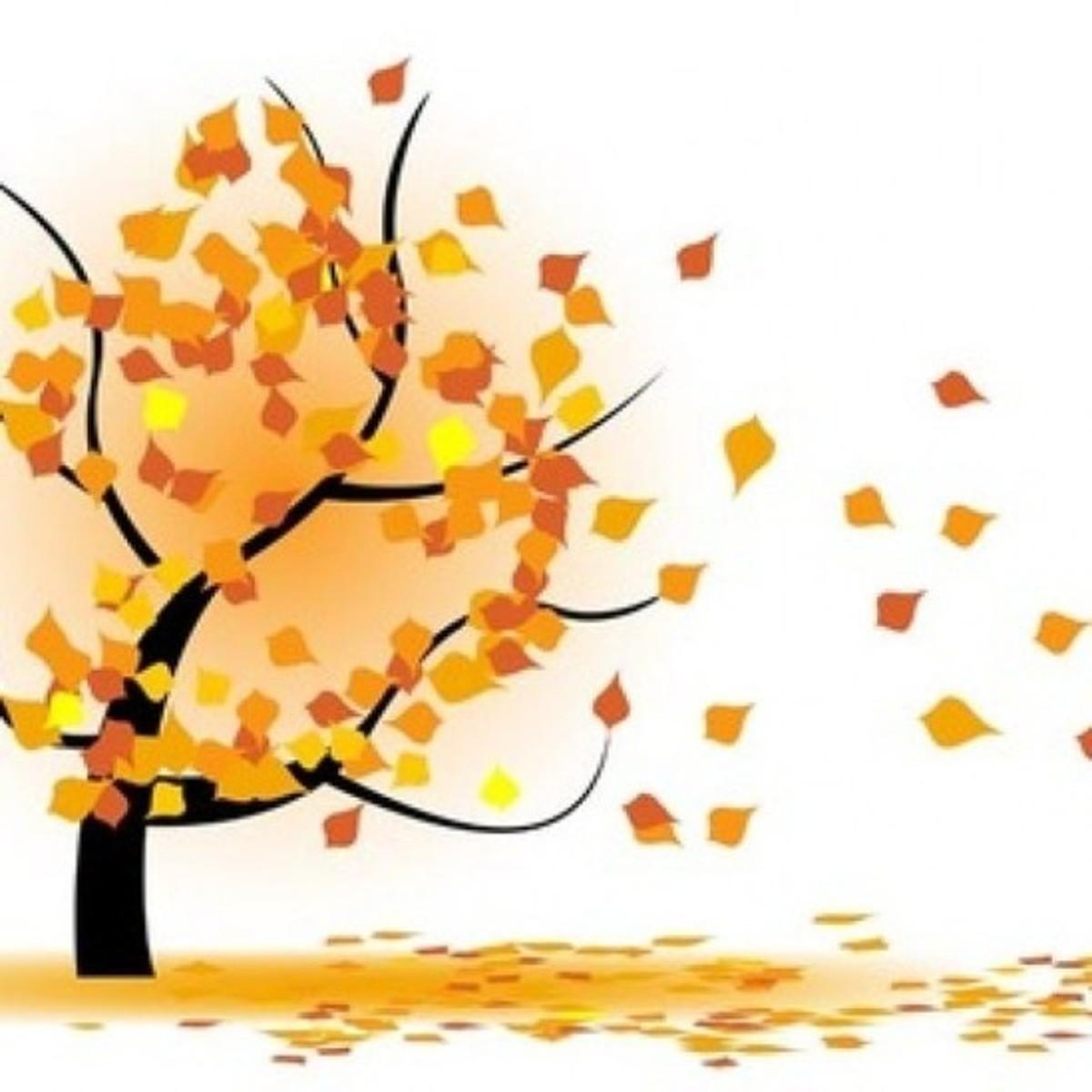Tree Losing Leaves in Autumn Wind