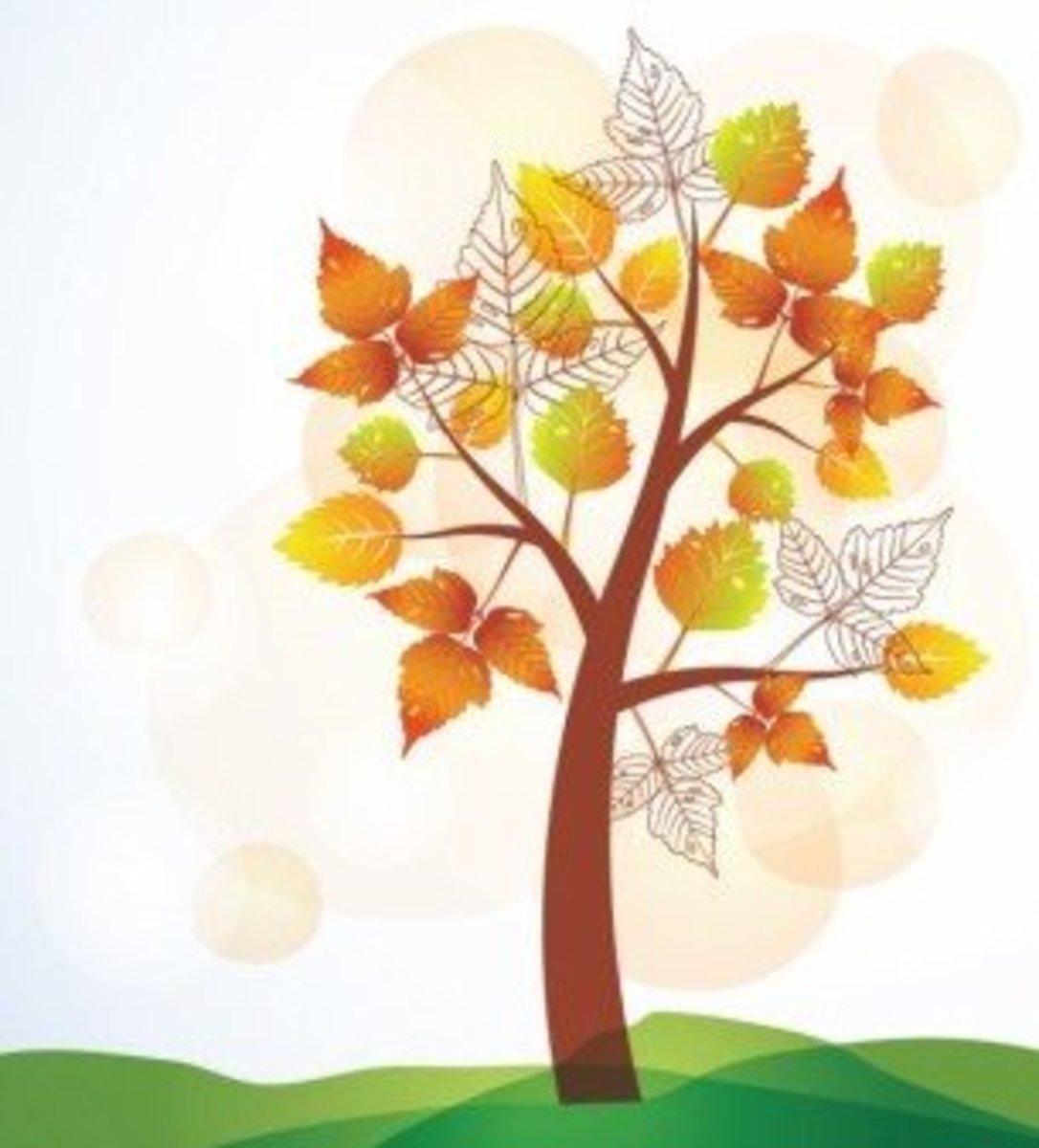 Elm Tree in Autumn